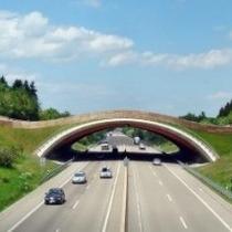 Holz-Beton-Verbund-Wildbrücke